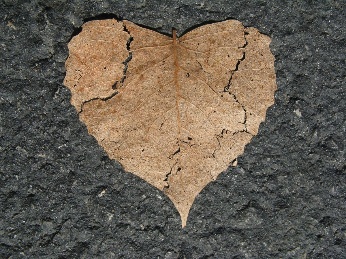 coeur feuille amour