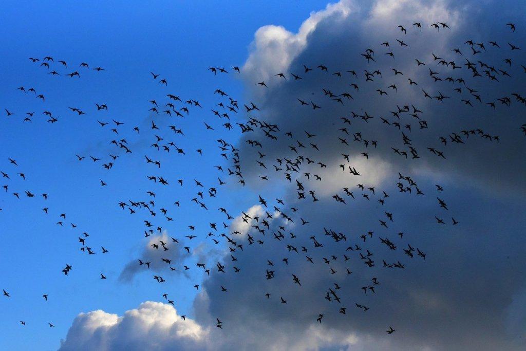 envol, oiseaux, ciel bleu