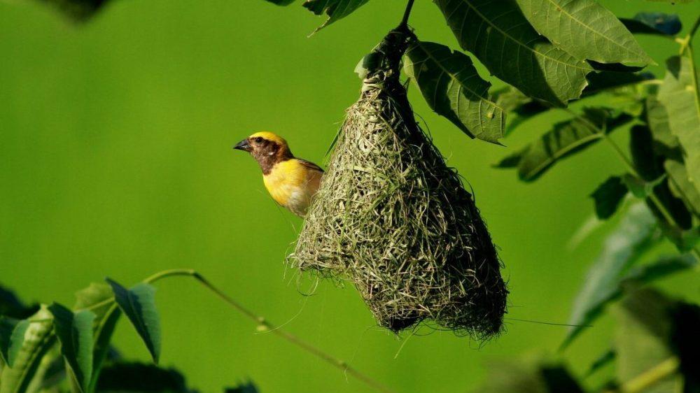 un petit nid douillet 2